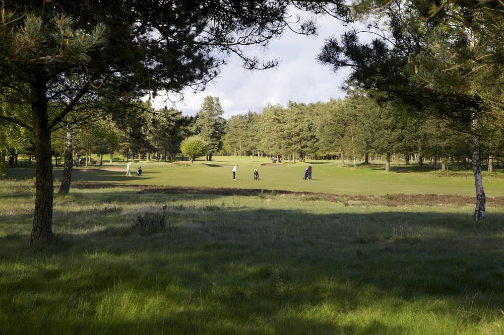 La forêt du golf de Ladybank.